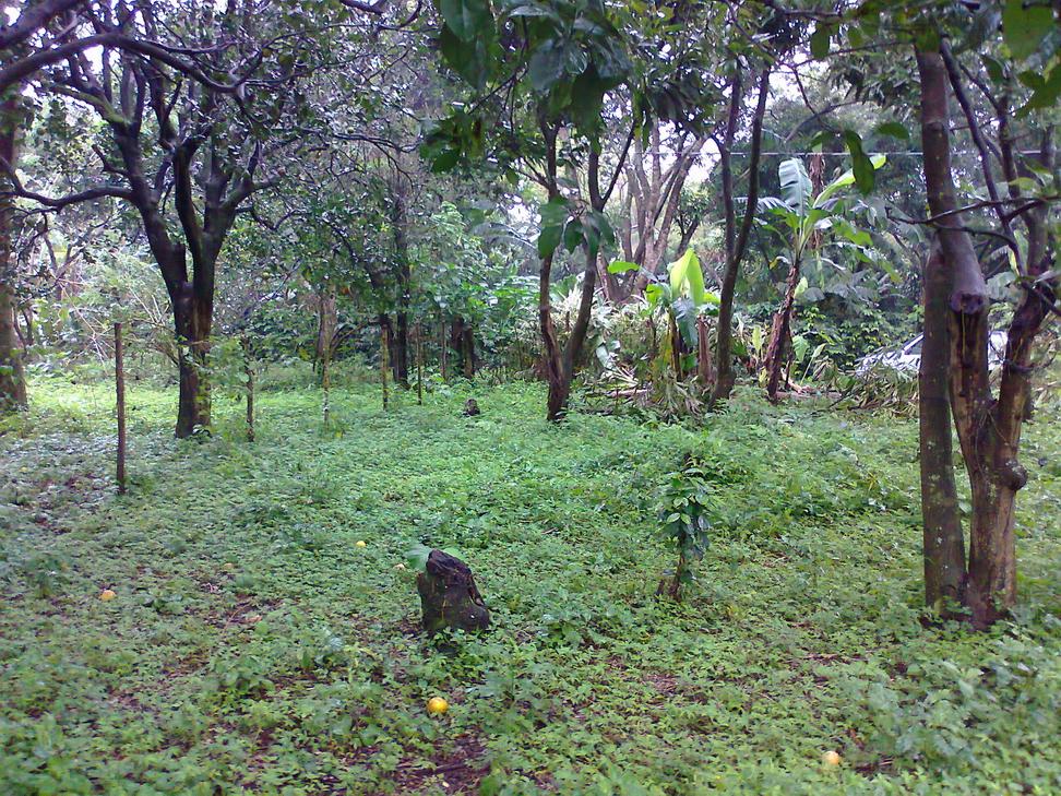 Vendo hermoso terreno cerca de Diriamba y San Marcos (Carazo)   CasaNica